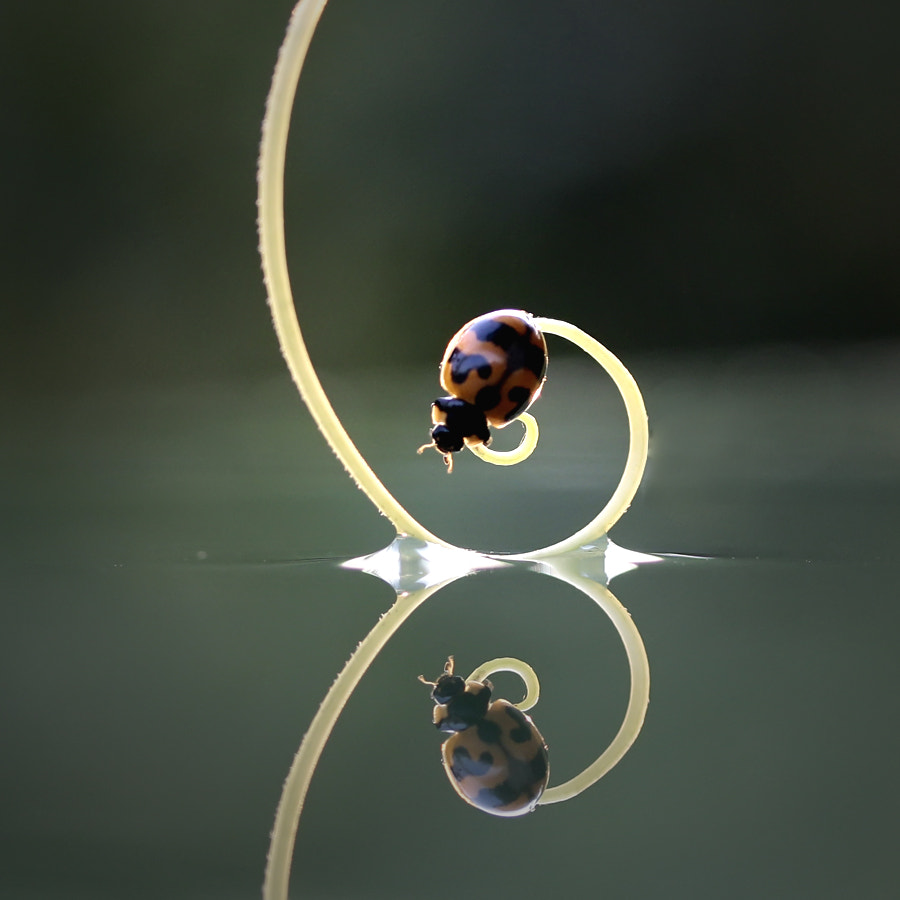 Photograph Circle of Bug by teguh santosa on 500px
