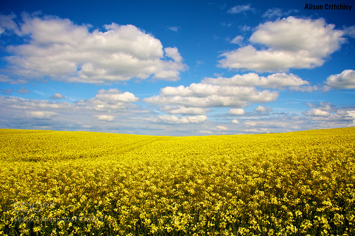 Photograph Heavenly Yellow by Alison Critchley on 500px