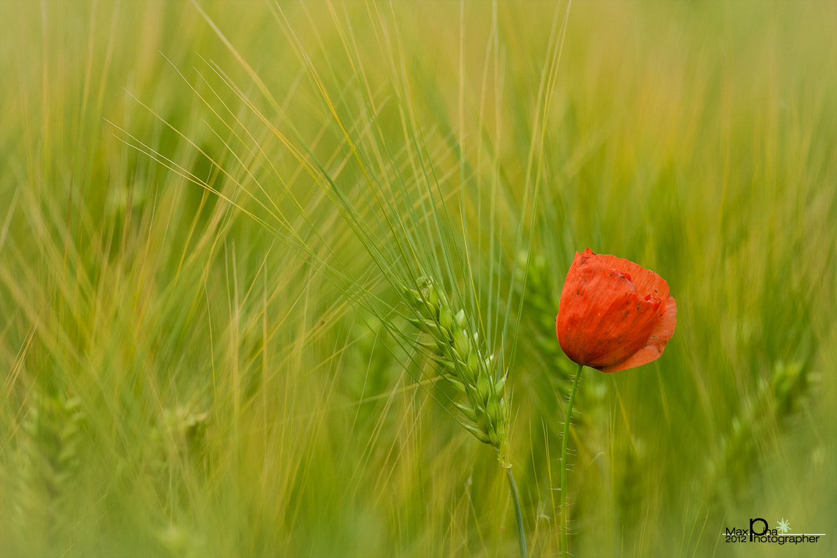 Photograph Red and green by Massimo Dadone on 500px