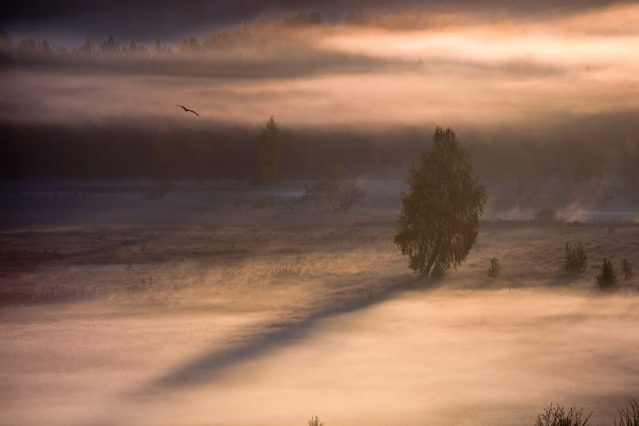 Photograph Kite's flight - 2 by Alexei Mikhailov on 500px