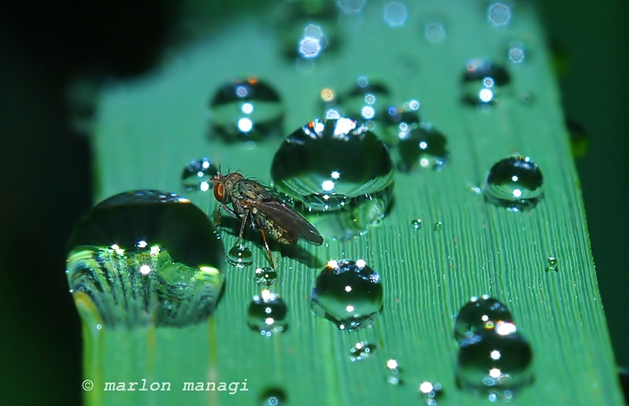 Photograph Morning Dew by Marlon Managi on 500px