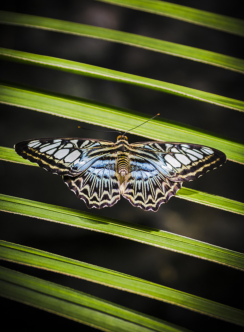 Photograph Blue Clipper by Andy Butler on 500px