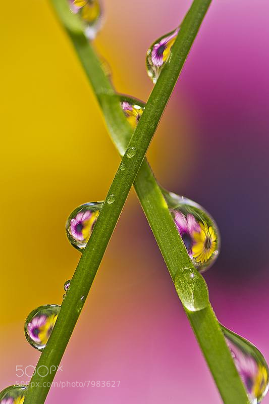Photograph Flower Drop by Reto Savoca on 500px