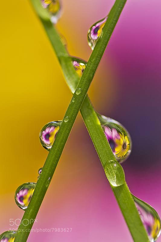 Photograph Flower Drop by Reto Savoca on 500px