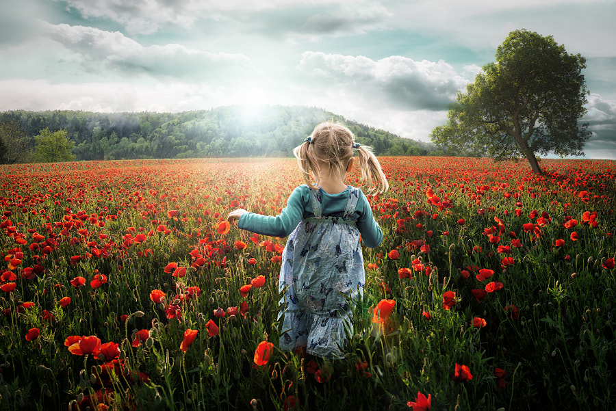 Into the Poppies by John Wilhelm is a photoholic on 500px.com