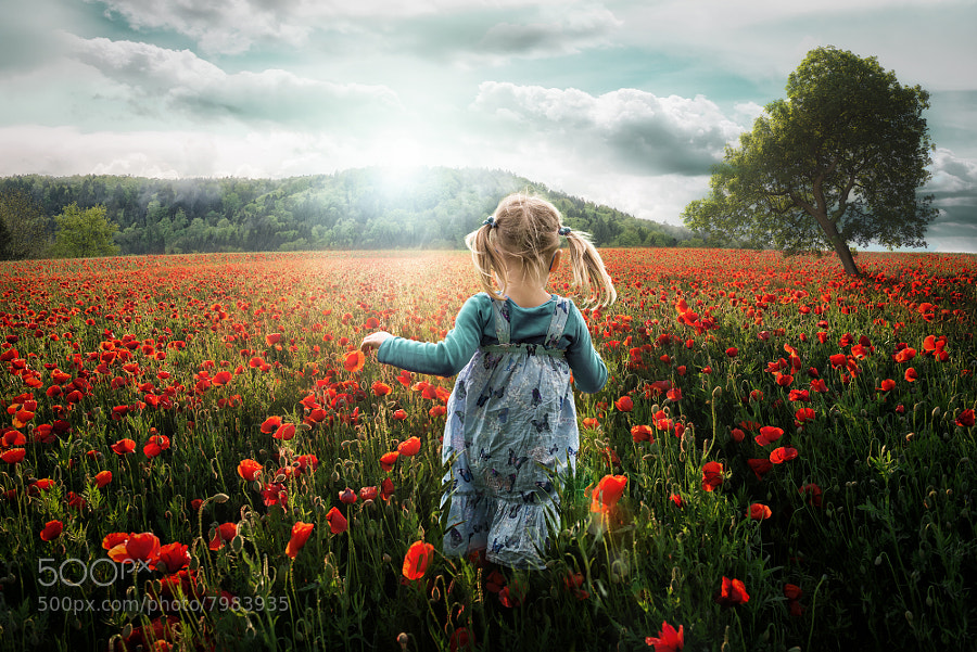 Photograph Into the Poppies by John Wilhelm on 500px