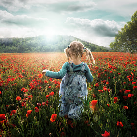 Into the Poppies by John Wilhelm (horazio)) on 500px.com