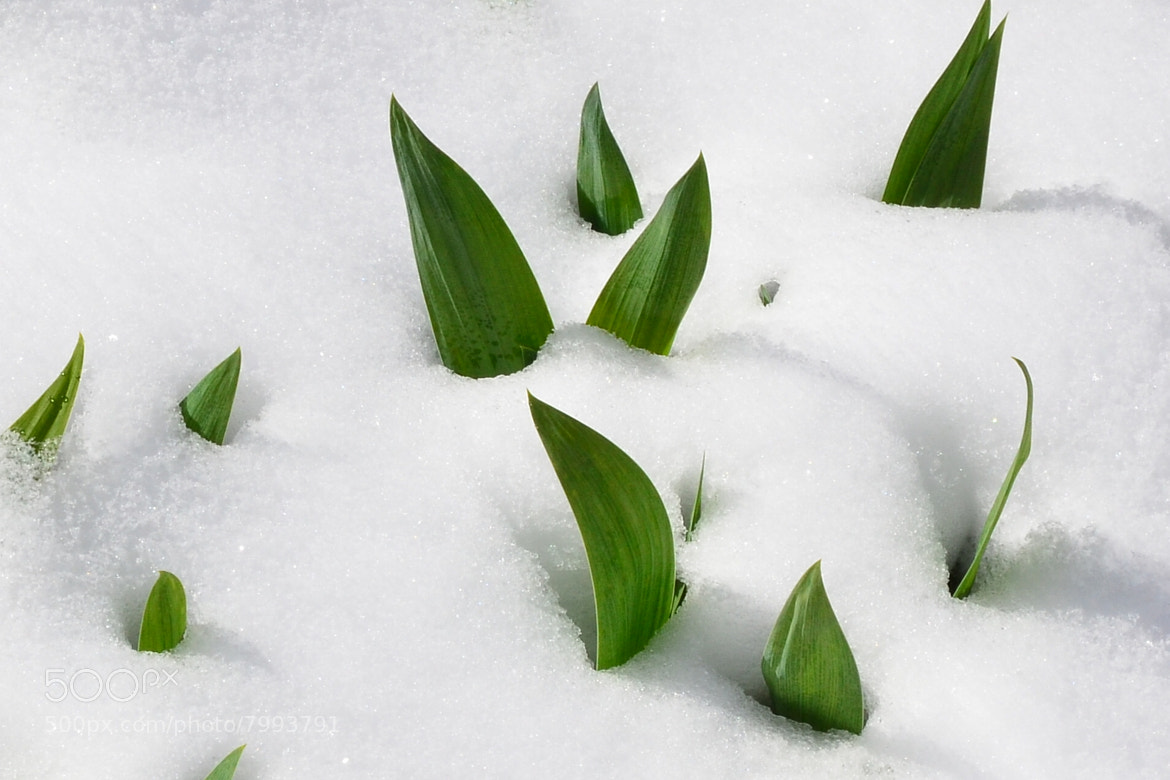 Photograph snow in may by helmut flatscher on 500px