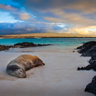 Restful Evening, Galapagos Islands