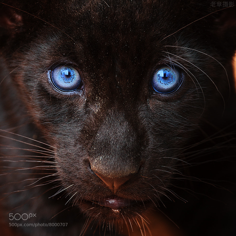 Photograph I see u by Michael Zhang on 500px