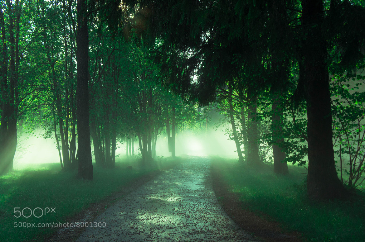 Photograph Enchanted forest by Ivar Krustok on 500px