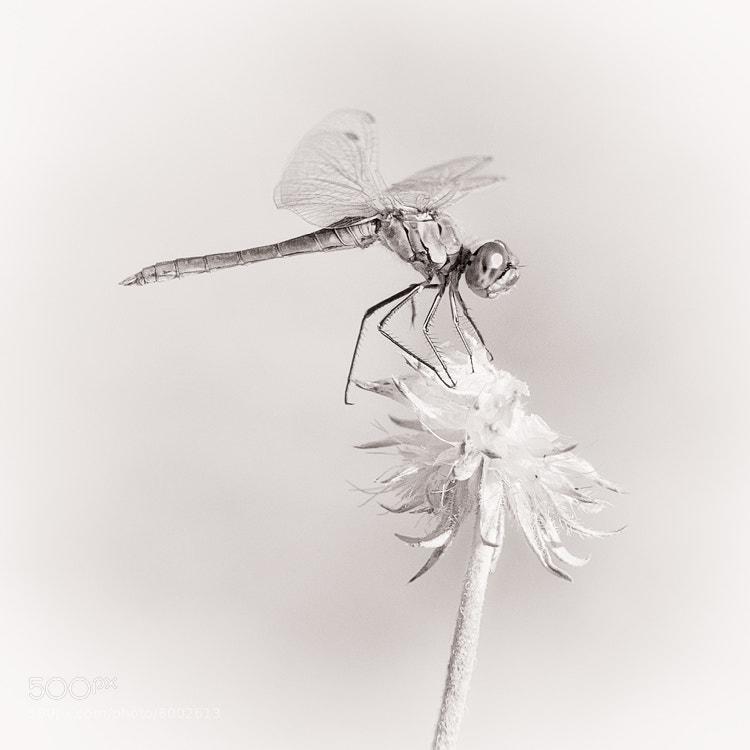 Photograph Soft by Antonio Diaz on 500px
