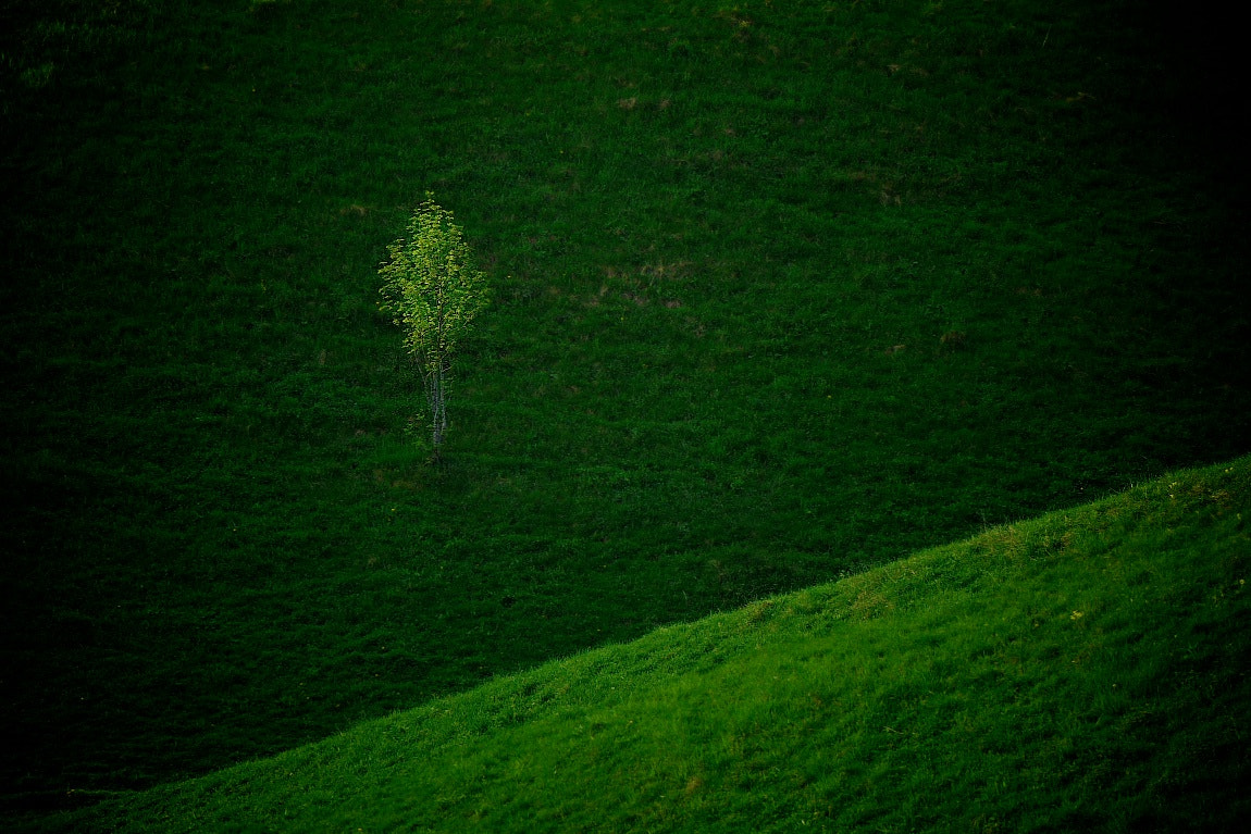Photograph All green by Alan Billyeald on 500px