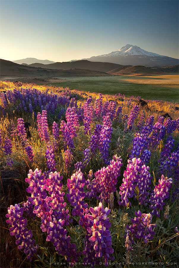 Photograph Seaching For Spring by Sean Bagshaw on 500px
