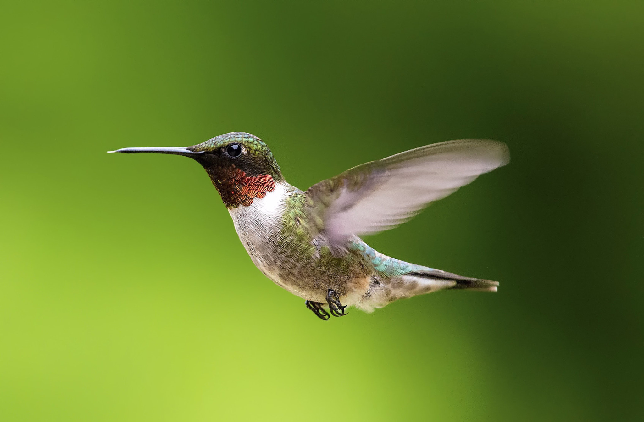Photograph Humming Birds of Tremblant by Vladimir Naumoff on 500px