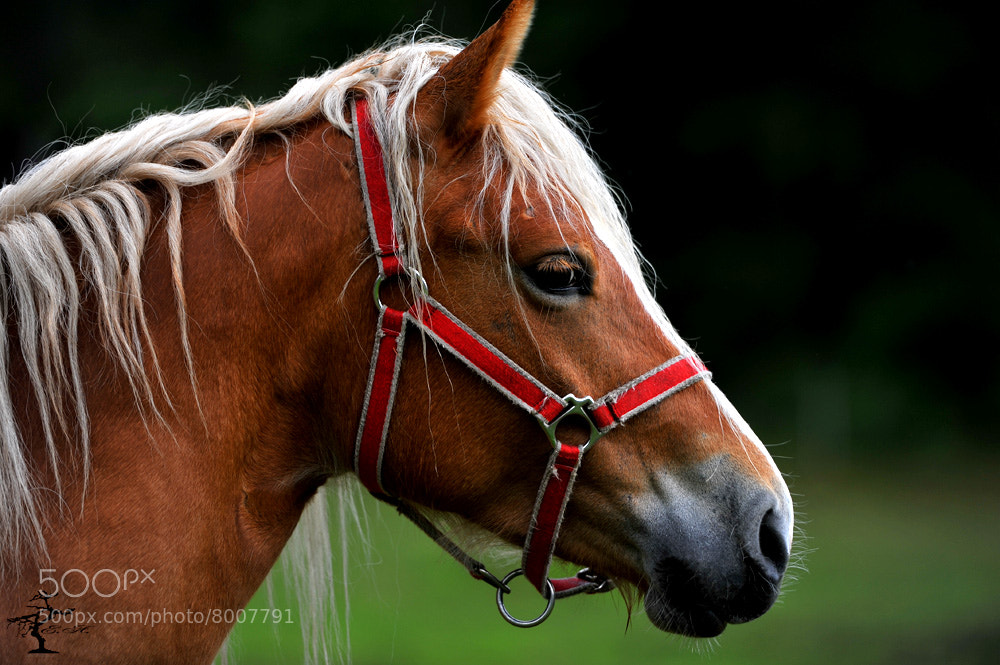 Photograph Horse by Eugenio Aldrighetti on 500px