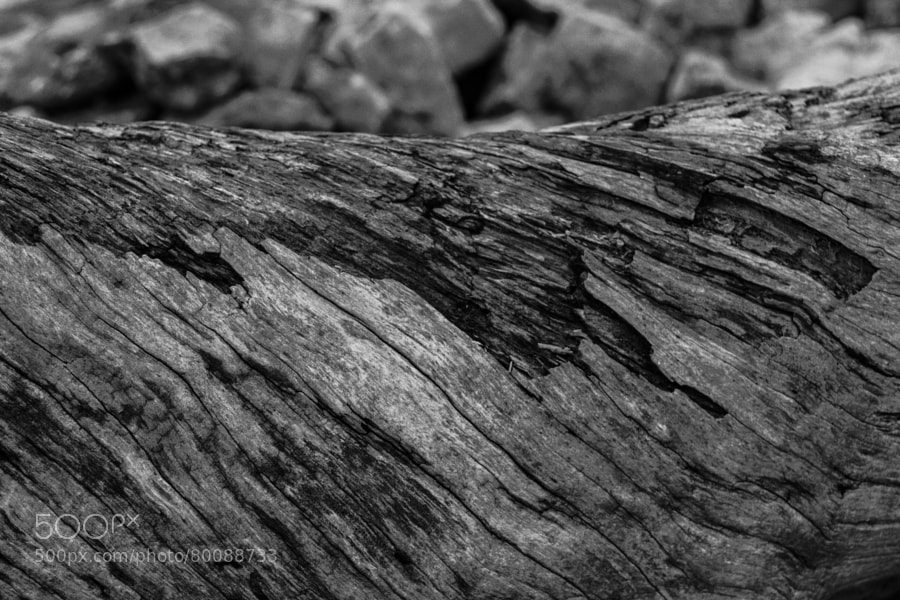 Photograph Weathered Log by Jeff Carter on 500px
