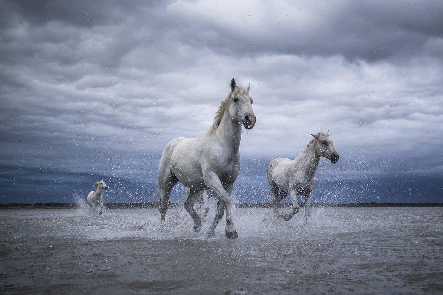 Horses in the storm by Federico Lenzi on 500px.com