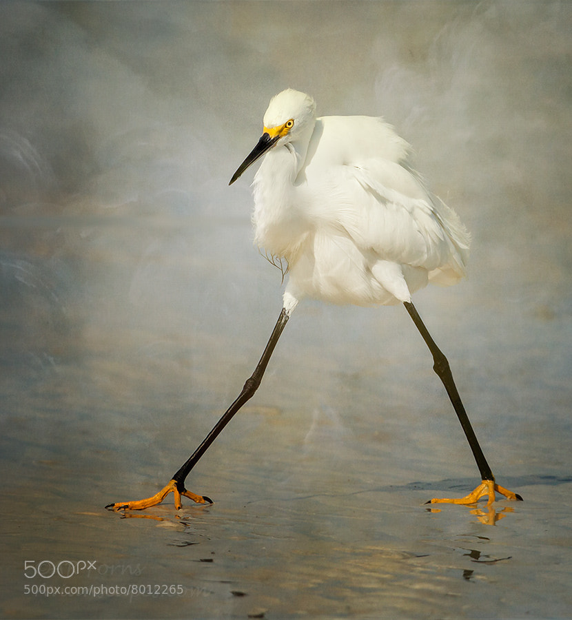 Photograph The Rock Star !!! by Alfred Forns on 500px