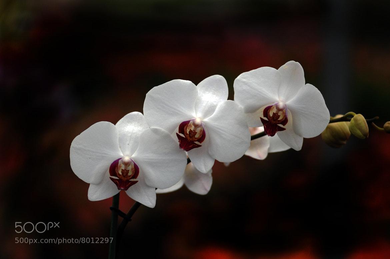 Photograph Orquideas by Cristobal Garciaferro Rubio on 500px