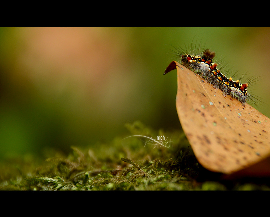 Photograph Wild Caterpillar by Mohan Duwal on 500px