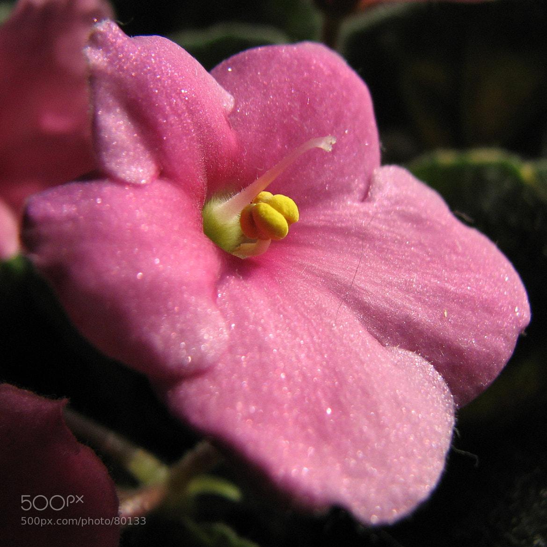 Photograph Flower by Go GunSky on 500px