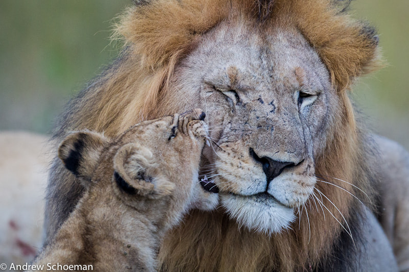 Photograph Listen Dad! by Andrew Schoeman on 500px