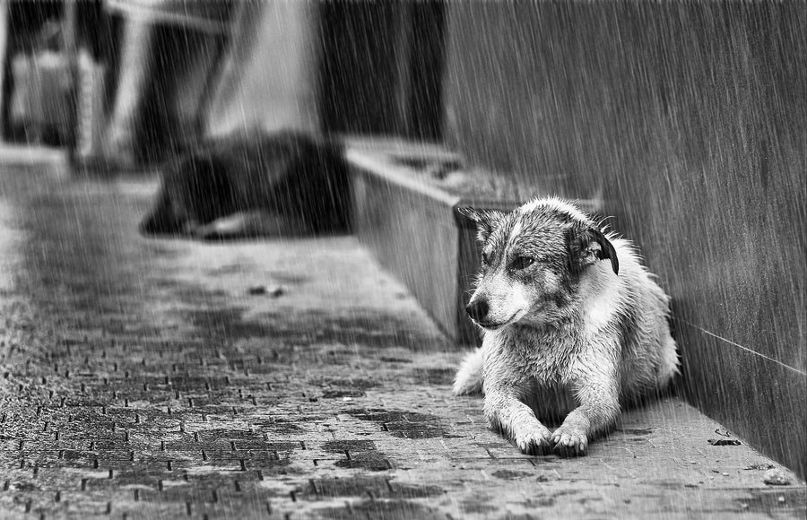 Photograph Another rainy day by Todor Rusinov on 500px