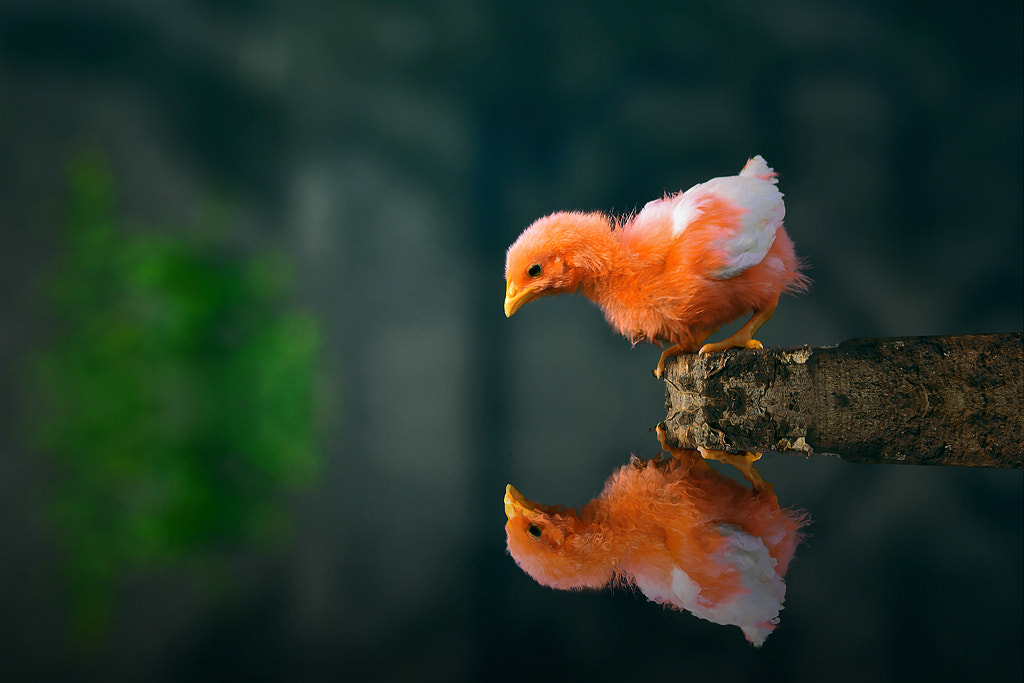 Photograph My Reflections! by Muhammad Buchari on 500px