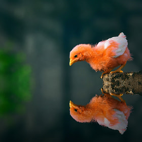 My Reflections! by Muhammad Buchari (muhammad_buchari)) on 500px.com
