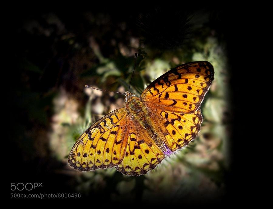 Photograph butterfly by Mustafa  Gül on 500px