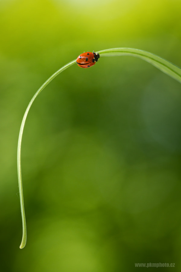 Photograph Ladybird by Peter Krejzl on 500px