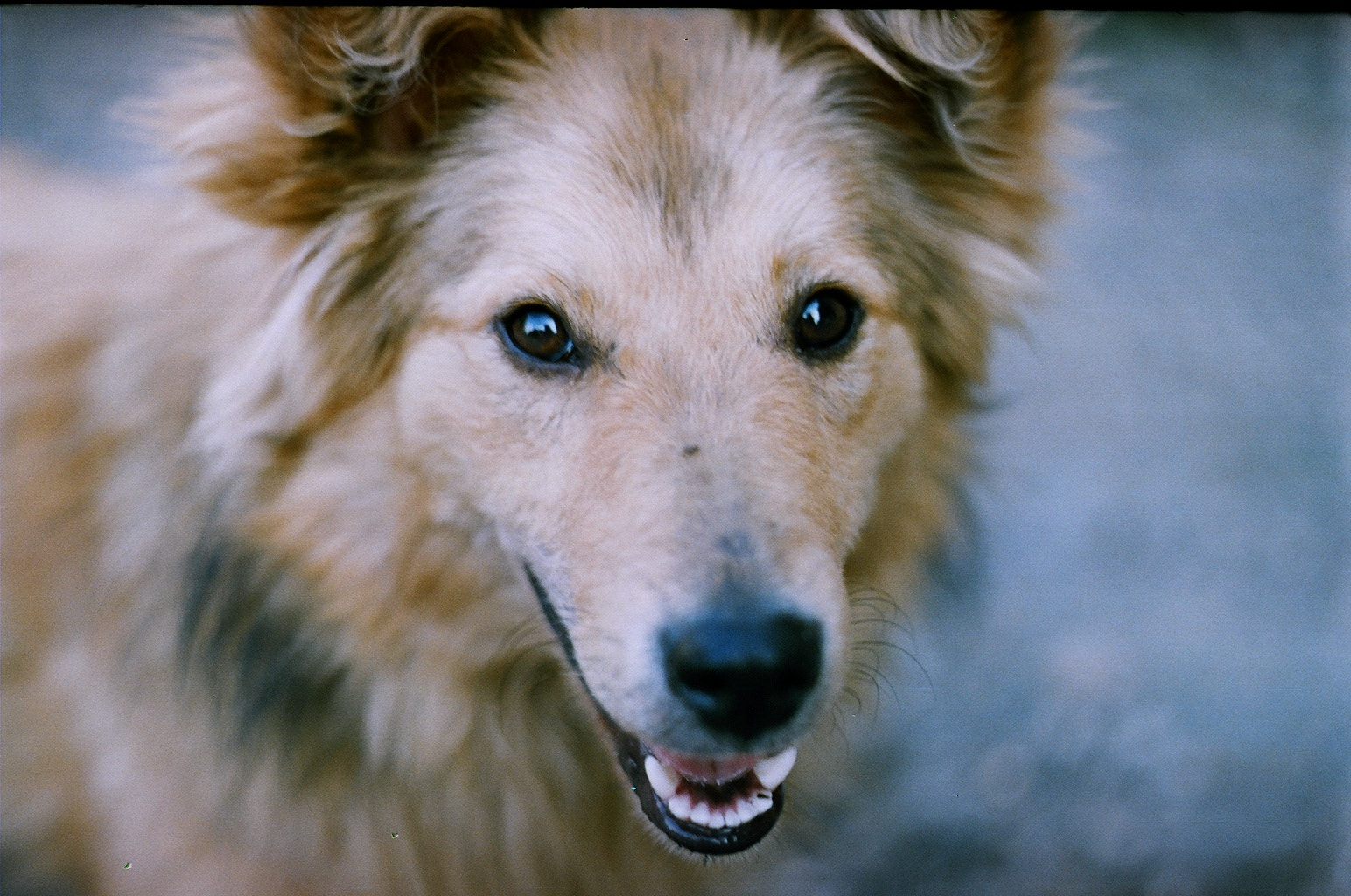 Photograph dog /zenit et by Marynka Vorobets (Meleshchuk) on 500px