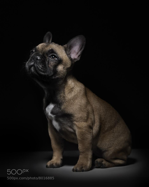 Photograph Lazy Dog by Studio  Blu 2.0 on 500px