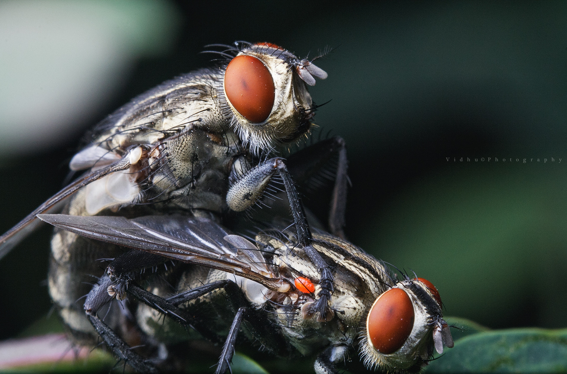 Photograph Caught in the act  by Vidhu S on 500px