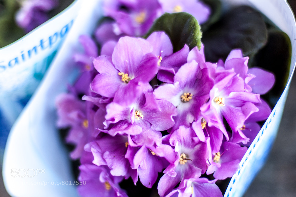 Photograph Violets by Evgeny Alterman on 500px