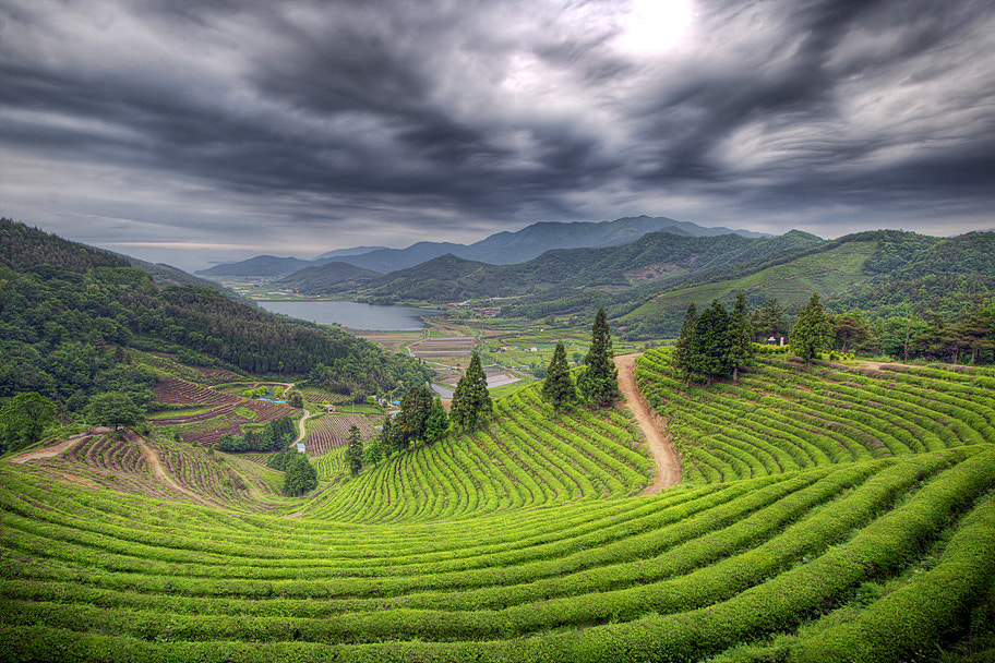 Photograph Cloudy Tea Field by Woon Shin on 500px