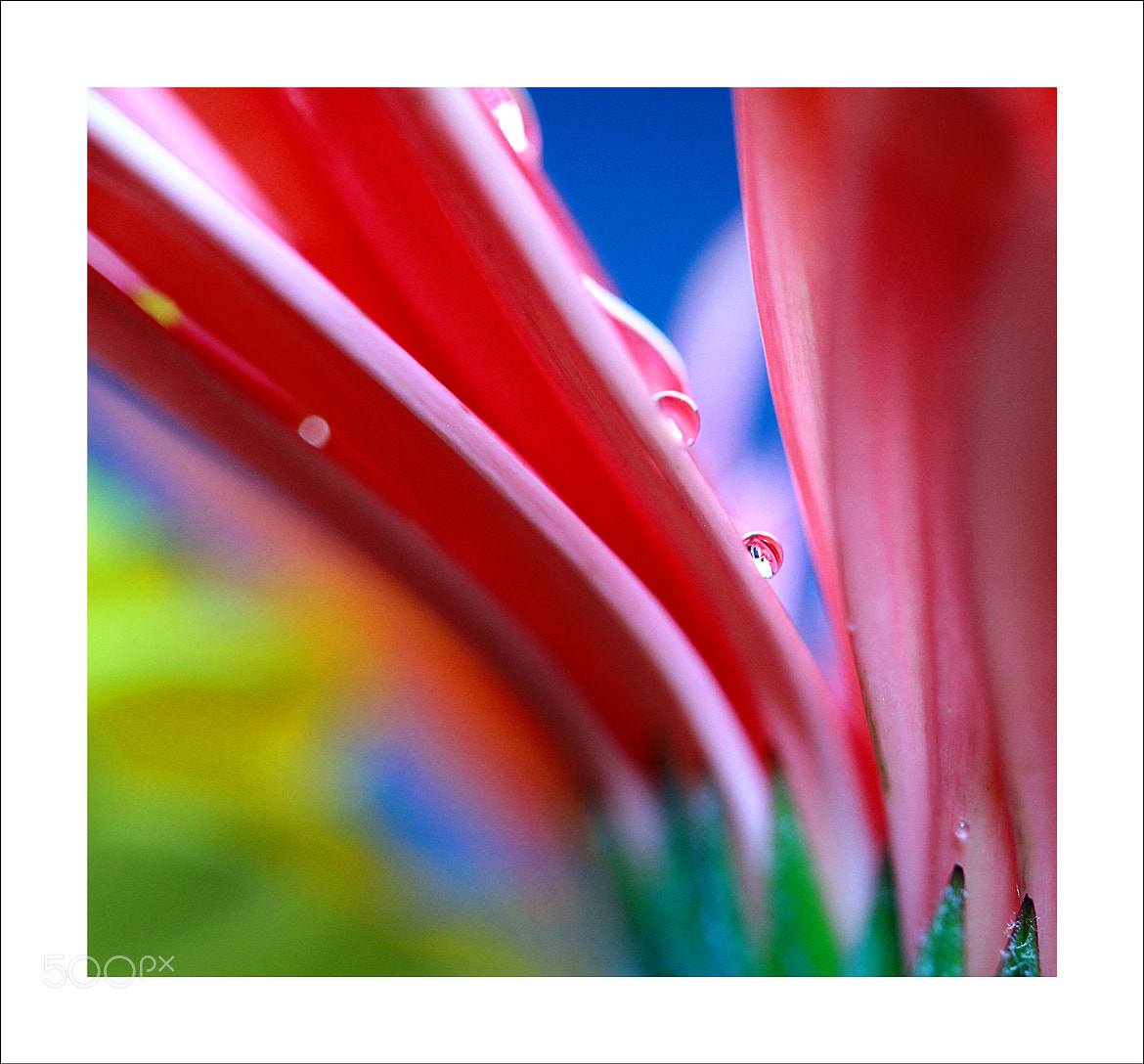 Photograph Macro Shot by Vo Duy on 500px