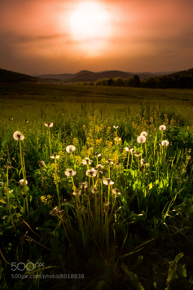 Photograph In the Light by Paul Jolicoeur on 500px