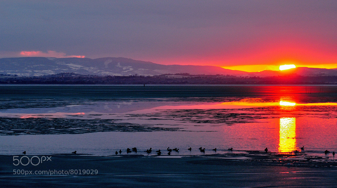 Photograph Sunset on the Lake Trasimeno with birds....  by Renato Pantini on 500px
