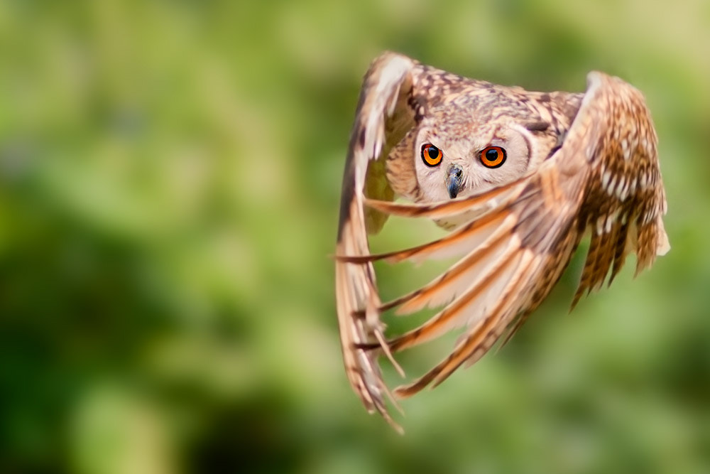 Photograph a study on the flight by Stefano Ronchi on 500px