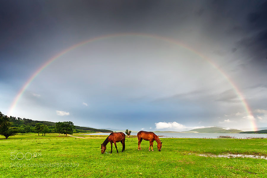 Photograph Under the Rainbow by Evgeni Dinev on 500px