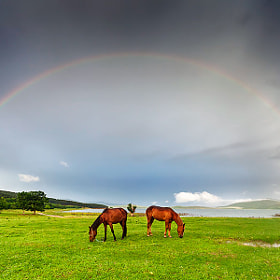 Under the Rainbow by Evgeni Dinev (evgord)) on 500px.com