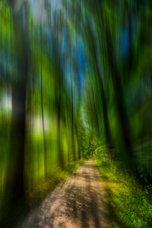 Light and shade of the forest!