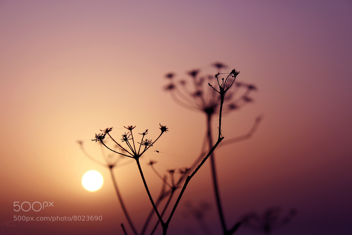 Photograph Staying up to see you rise by Maria Galea on 500px
