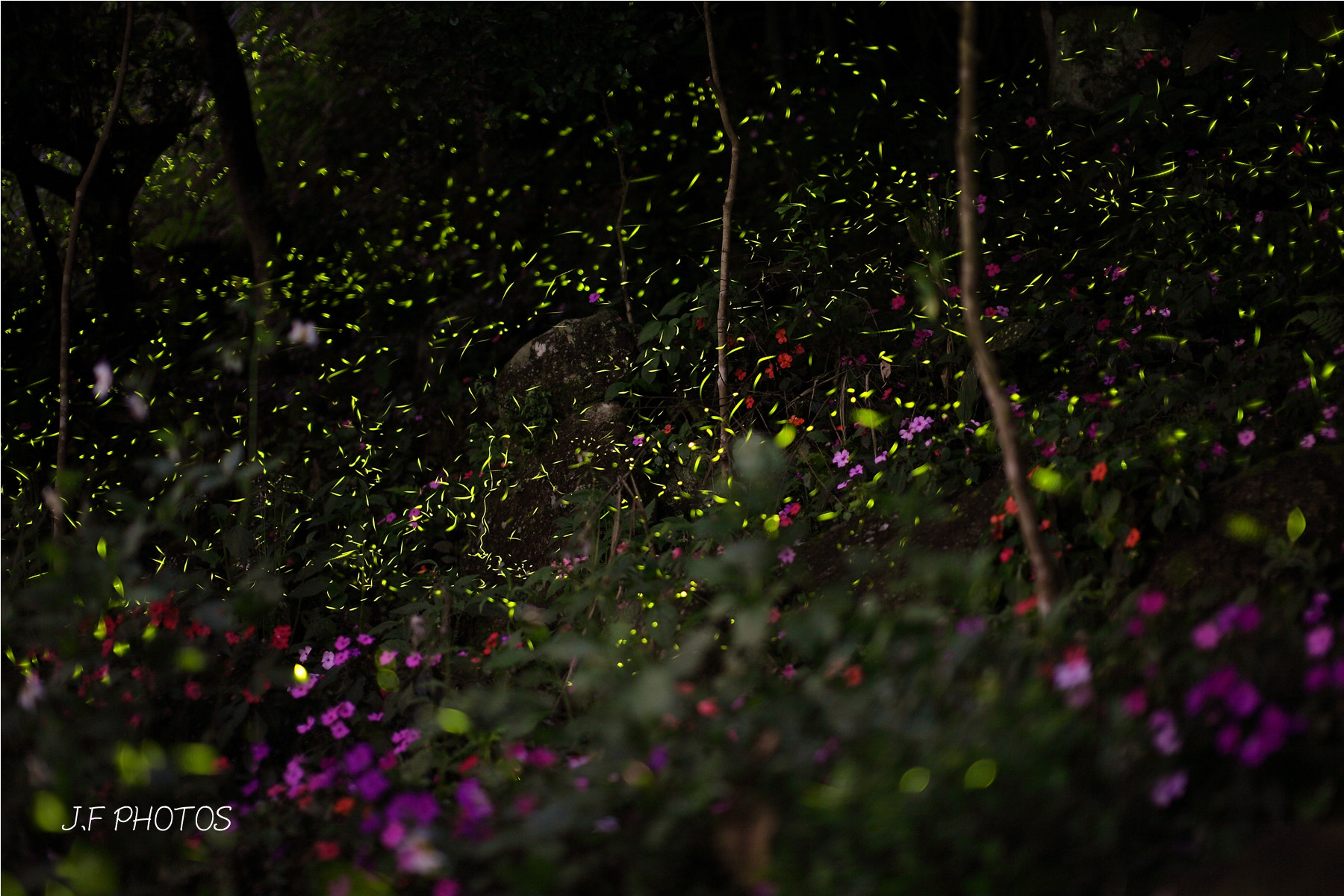 Photograph Firefly by Jeff Chiu on 500px