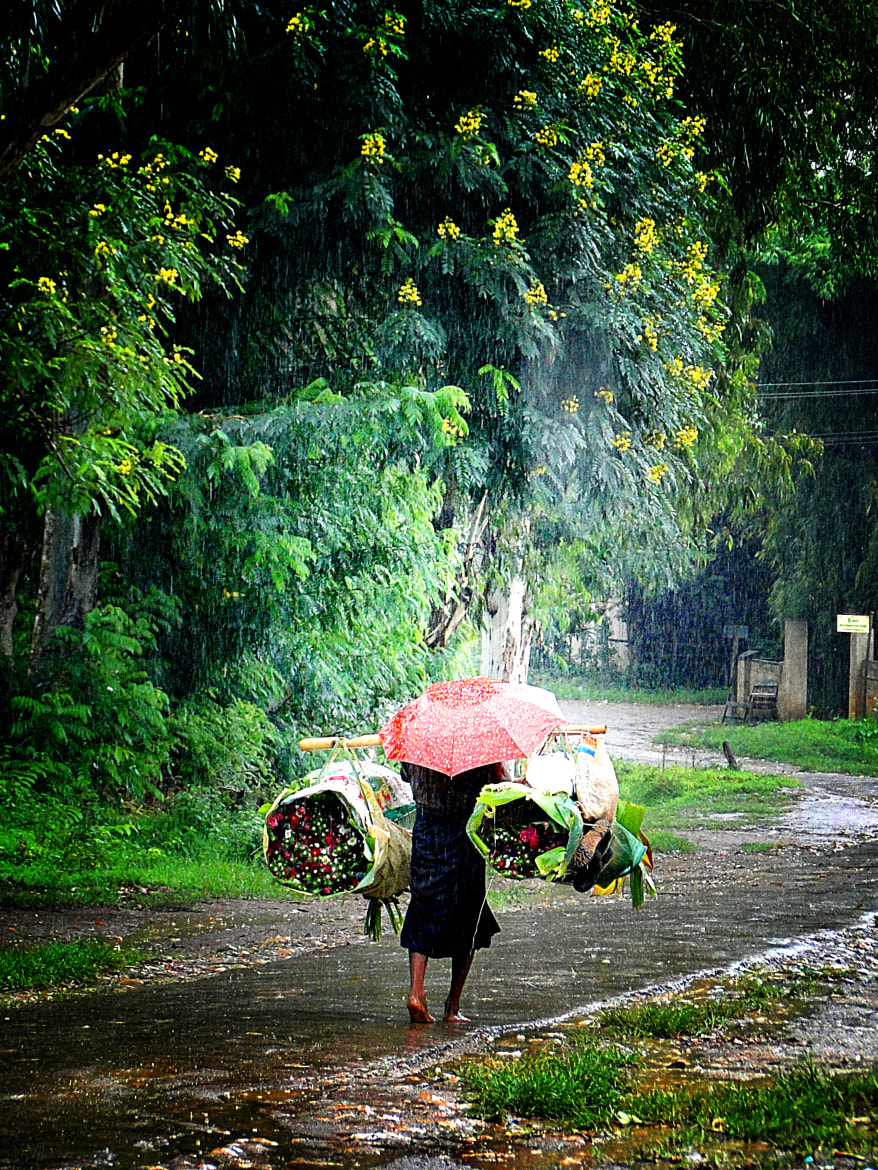 Photograph rain and flowers by vave photography on 500px
