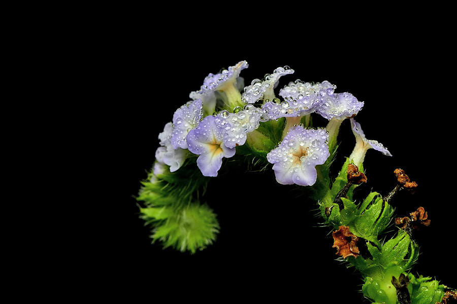 Photograph The Wild Flower by Donald Jusa on 500px