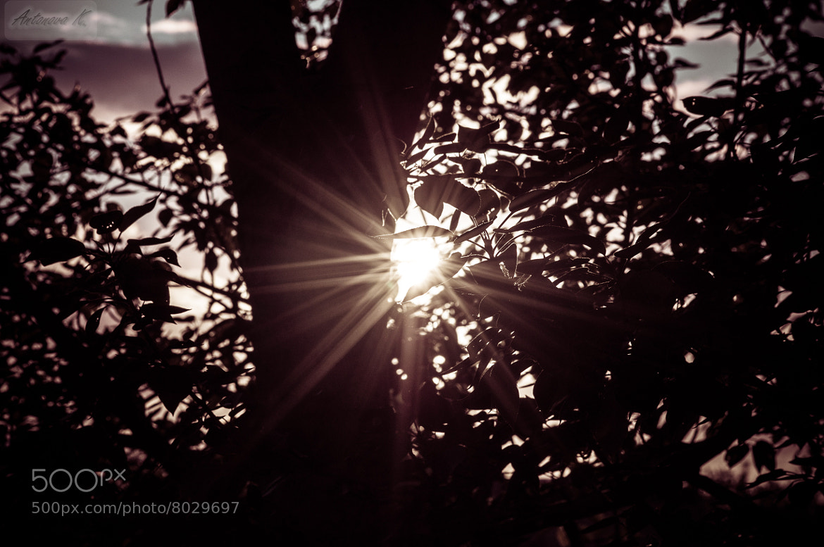 Photograph sun ☼ or star ★  by damnlynx  on 500px