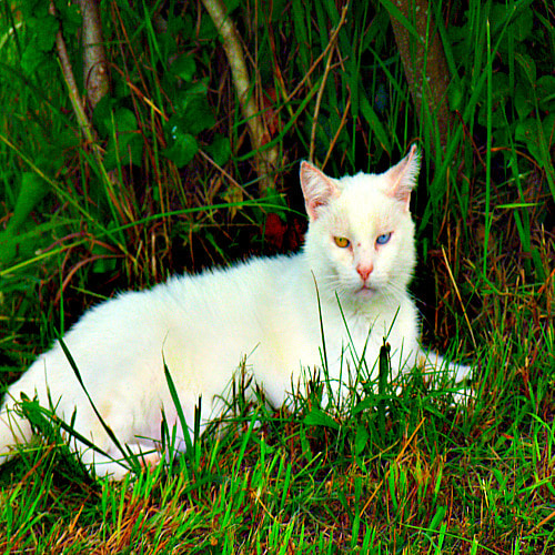 Photograph Witchy Cat by April Colon on 500px